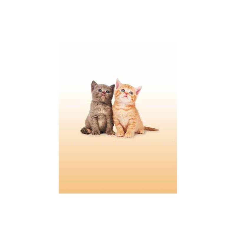 Estor CATS