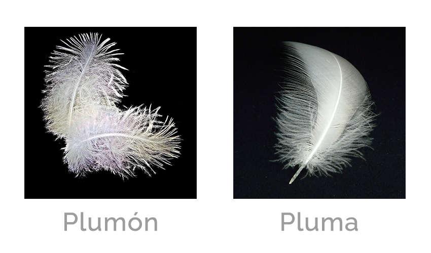 Diferencia entre pluma y plumon